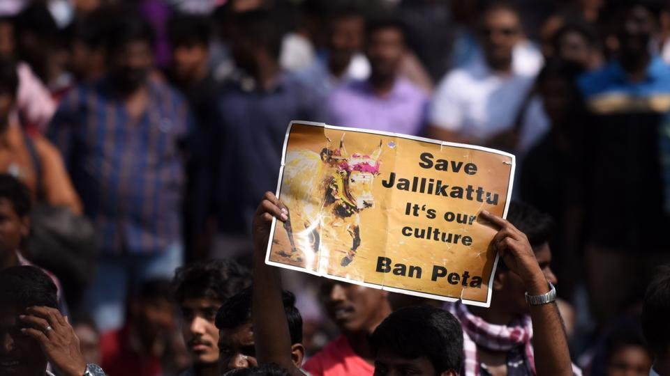Students shout slogans and hold placards during a demonstration against the ban on Jallikattu, and calling for a ban on animal rights orgnisation PETA, at Marina Beach at Chennai.