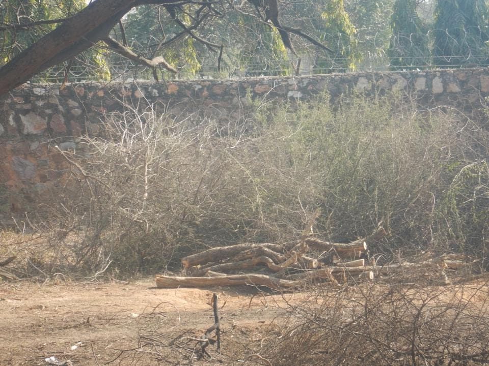 As many as 60 trees were cut in Raisina forest area using a chain saw. The area is between B36 and B42 of Ansal Retreat.