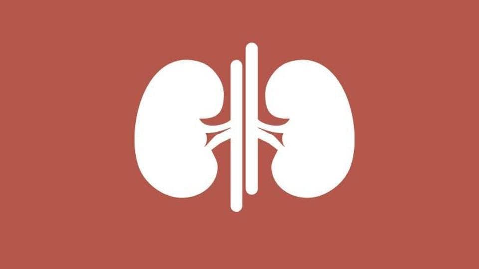 Low protein levels may up kidney function decline in elderly