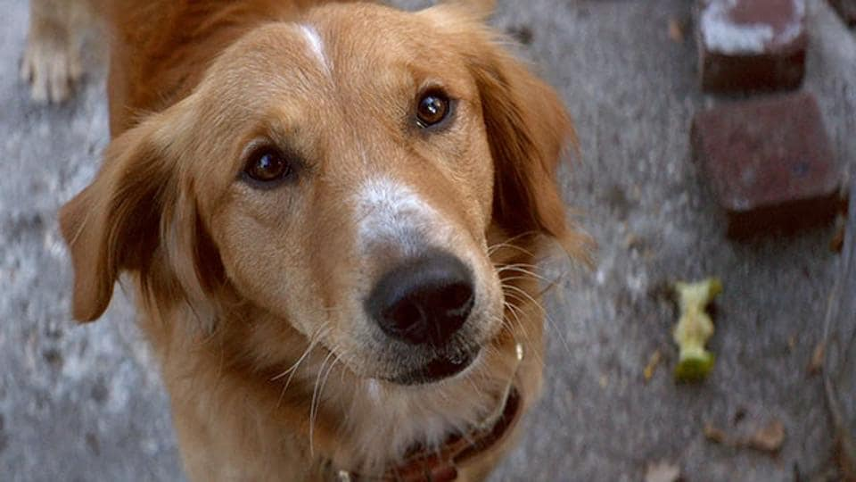 A Dog's Purpose is scheduled to release on January 27.