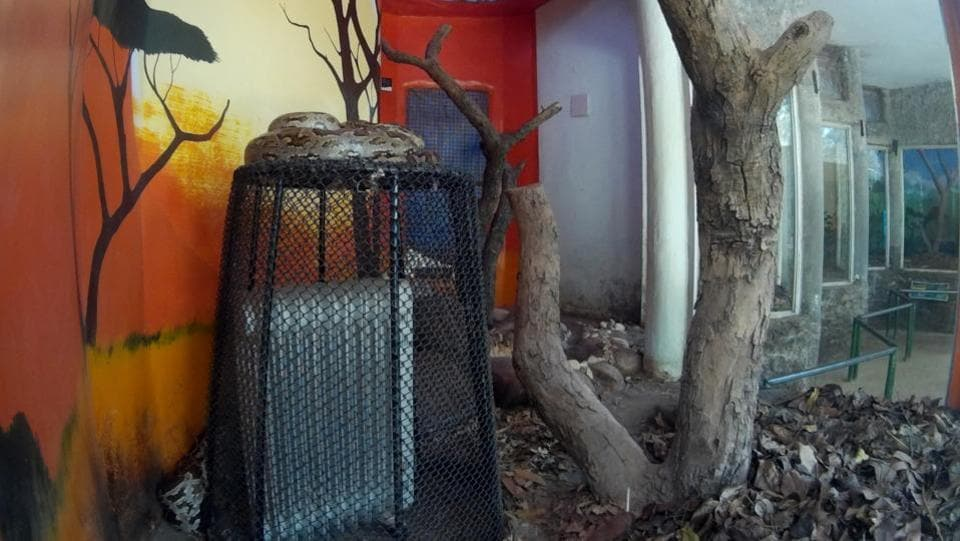 A python sits over an oil heater to get warmth in Chattbir Zoo on Thursday. (Ravi Kumar/HT Photo)