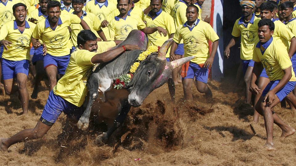 Jallikattu ban,Jallikattu protests,Tamil Nadu govt