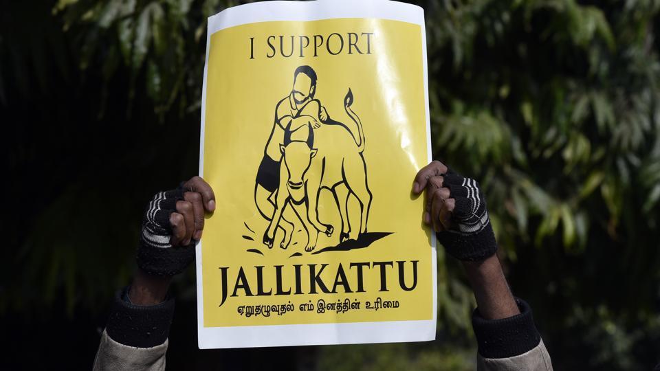 Jallikattu protests,Jallikattu ban,Tamil Nadu