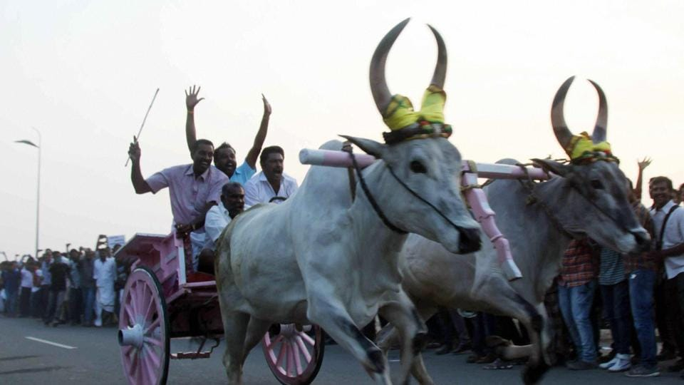 People take part in protest against ban on Jallikattu in Coimbatore on Thursday.