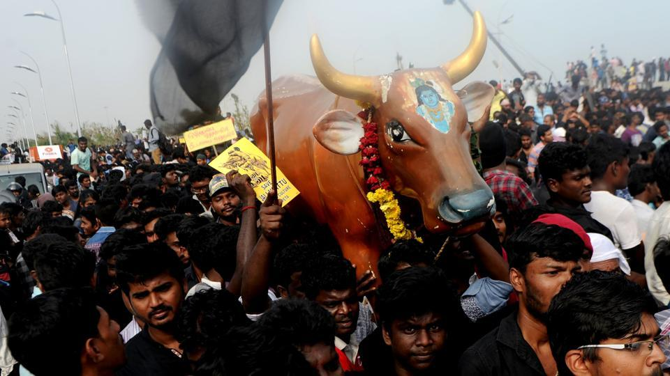 Protesters carry a replica of a bull as they shout slogans during a demonstration against the ban on the Jallikattu, the bull-taming spor,  in Chennai on January 20, 2017.