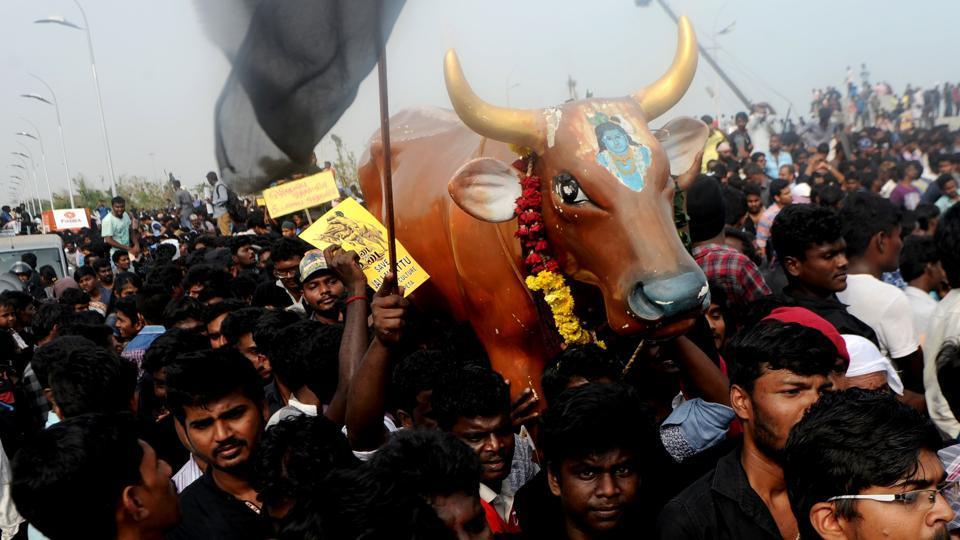 Jallikattu ban,Jallikattu protests,Tamil Culture