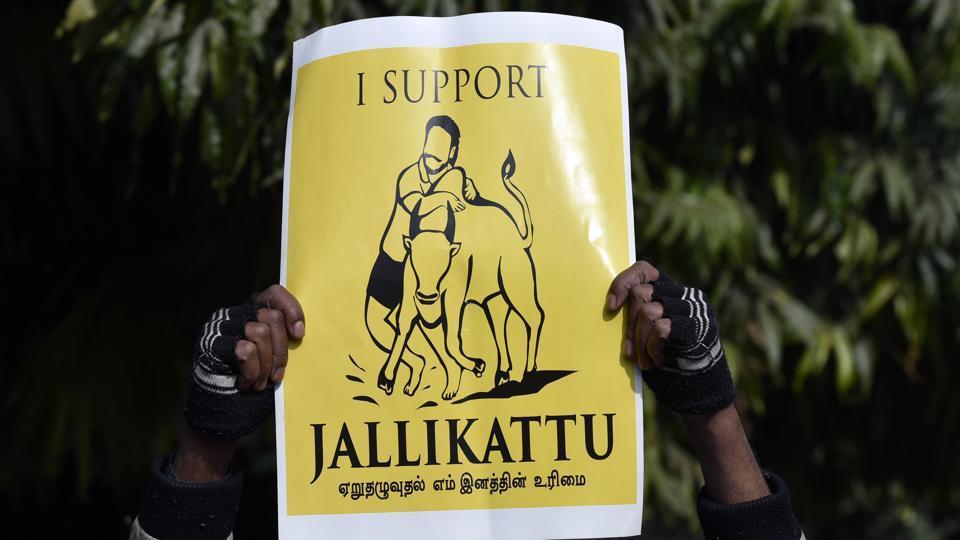 Jallikattu,Modi,Tamil Nadu