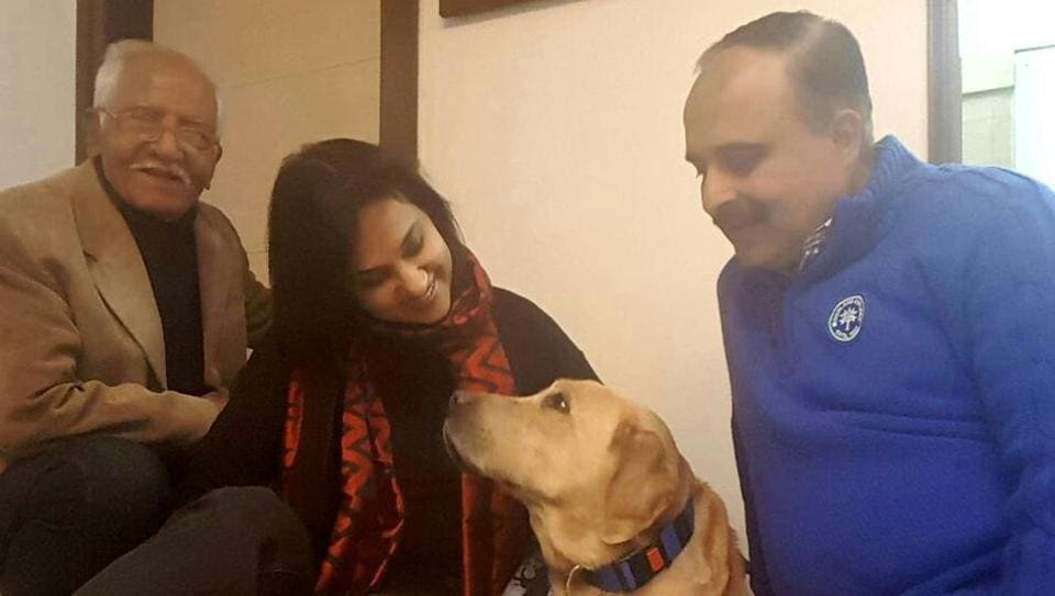 Labrador,dog stolen,pet stolen