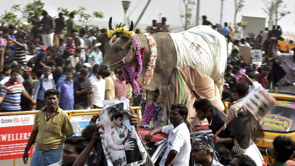 Youngsters and students participate in a protest to lift the ban on Jallikattu and impose ban on PETA, at Kamarajar Salai, Marina Beach in Chennai on Friday.