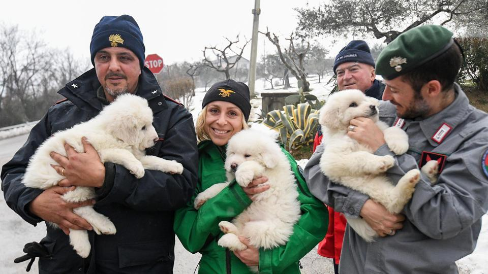 Rescuers hold three puppies that were found alive in the rubble of the avalanche-hit Hotel Rigopiano, near Farindola, central Italy, Monday.