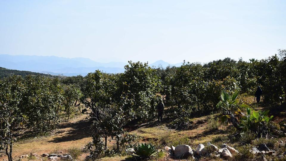 Mexico,Mass graves,Mexico border