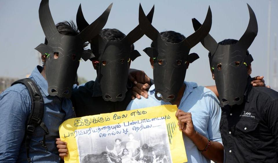 Students have been demonstrating at the Marina beach for the past one week, demanding a permanent solution for holding Jallikattu.