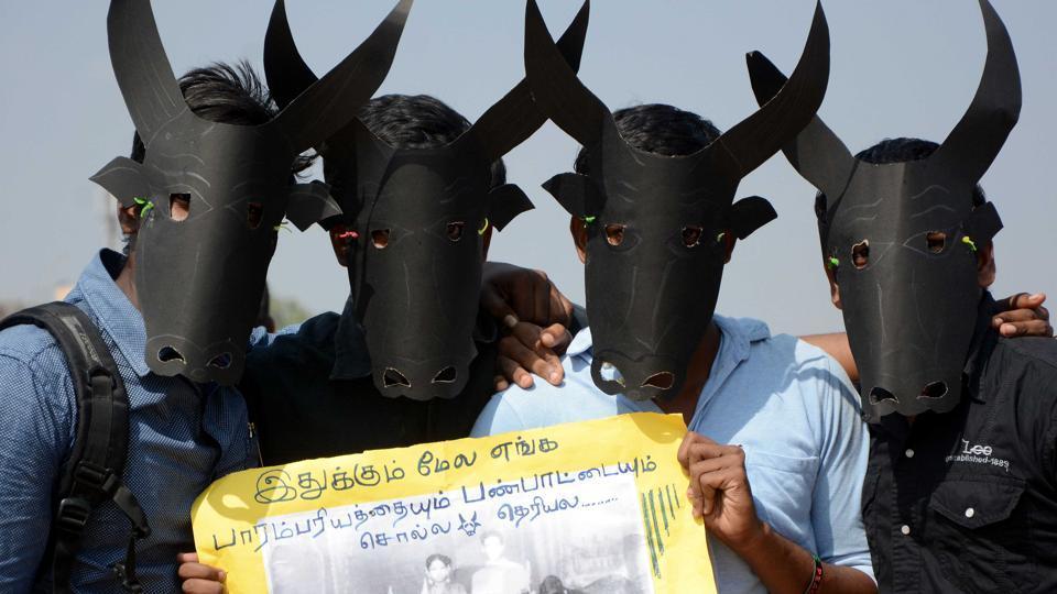 Students protest for Jallikattu at marina Beach in Chennai.