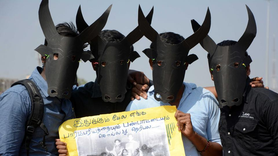 Jallikattu,Chennai,Tamil Nadu assembly
