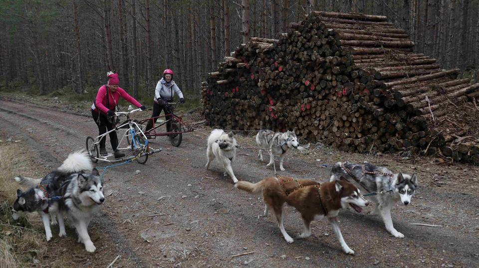 Husky dogs pull rigs with their mushers during practice for the Aviemore Sled Dog Rally in Feshiebridge, Scotland, Britain. (Russell Cheyne/REUTERS)