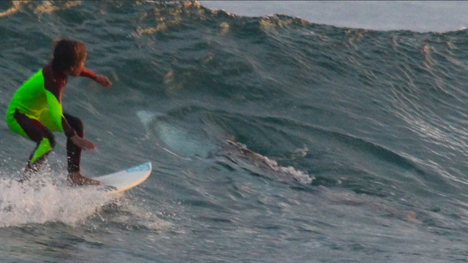 Australia,Great white shark,Close encounters