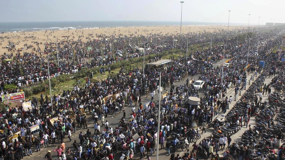 Protestors gather at Marina beach demanding a ban be lifted on the traditional sport of bull-taming, or Jallikattu, in Chennai.
