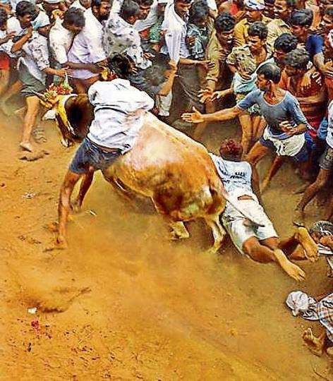 'In my gradually evolving view, the uprising in Tamil Nadu is not so much about cattle or even Hindi. I see it as the outpouring of accumulated despair about the health of Tamil Nadu.'