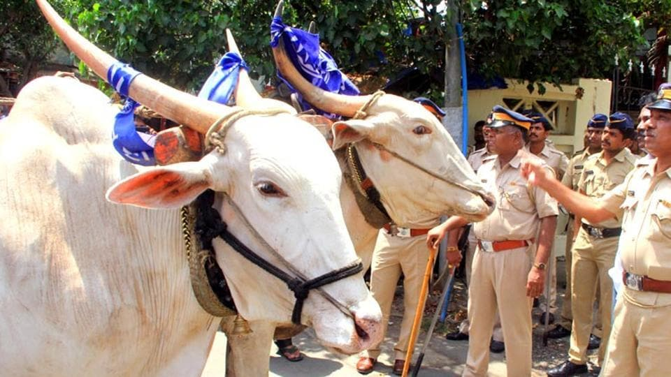 The SC has said that it cannot direct states to frame law banning slaughter of cattle while refusing to entertain a PIL asking it for either a total ban or a uniform policy protecting cattle from slaughter and smuggling.