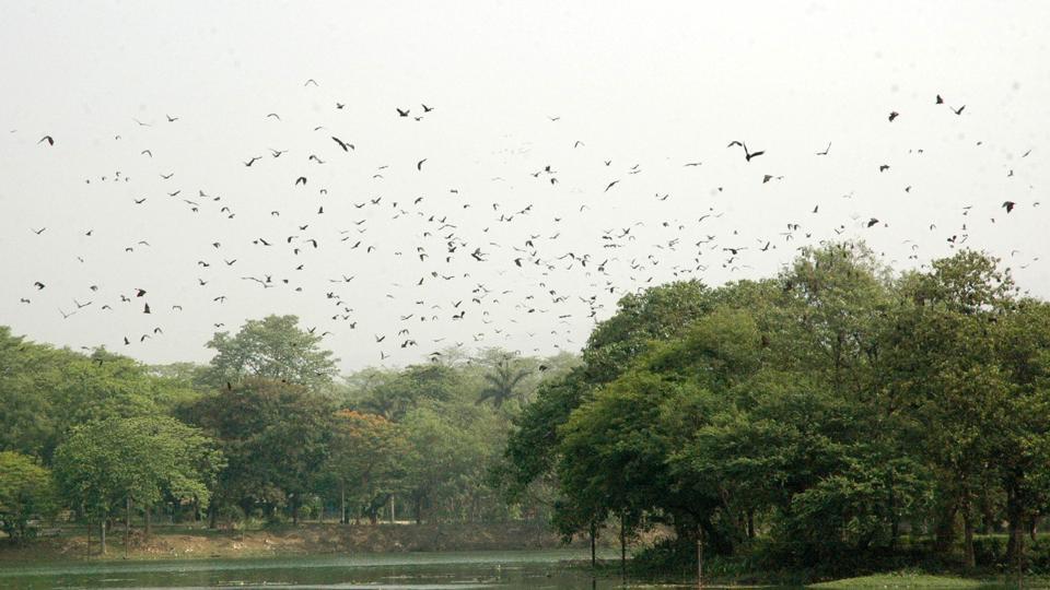 Flying fox,Jamshedpur,Jayanti Sarovar