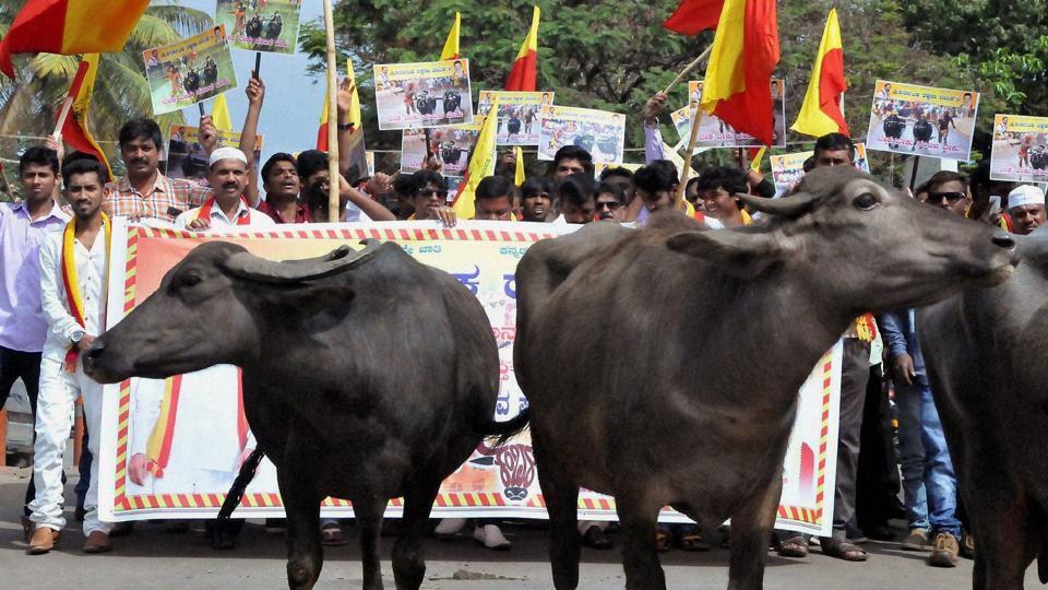 Activists protest seeking the permission to hold Kambala, at Chikmagalur in Karnataka.