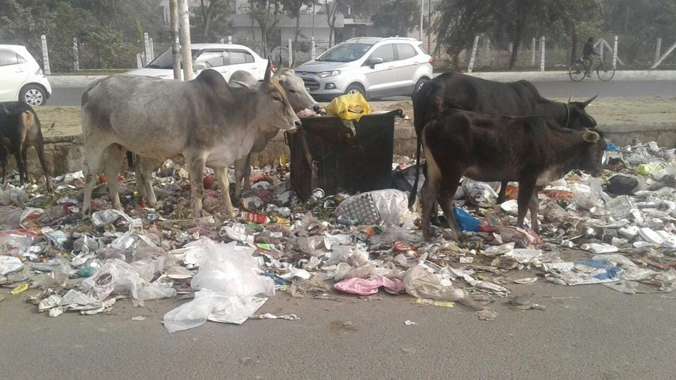 The solid waste generated in the two cities is dumped on vacant plots and roadside, in the absence of a scientific mechanism.