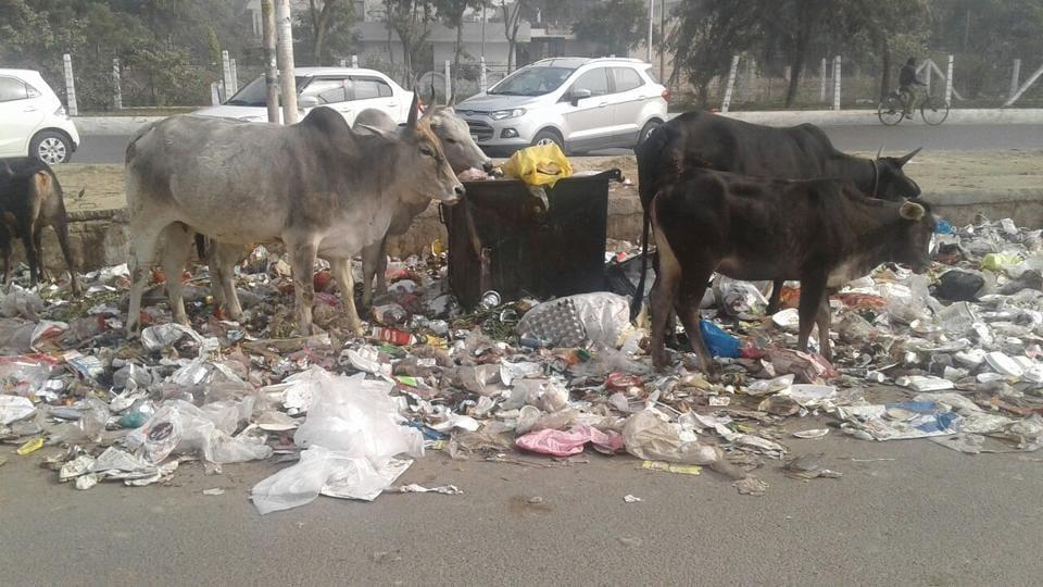 Greater Noida authority,Astoli,waste-to-energy plant