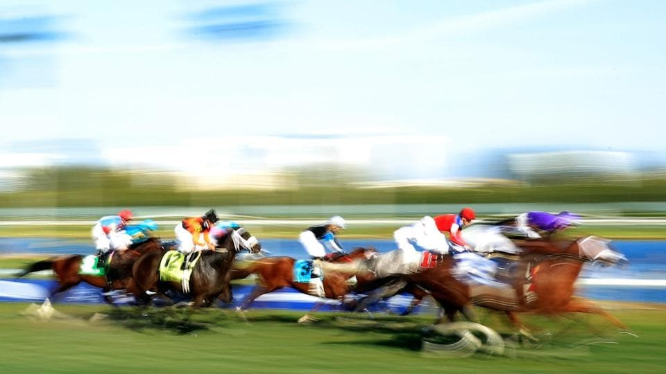 Horses race ahead of the $12 Million Pegasus World Cup at Gulfstream Park on January 28, 2017 in Hallandale, Florida.  (Cliff Hawkins / AFP)