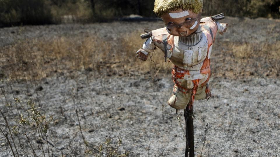 A scarecrow stands in a field of potatoes destroy by fire in Florida, Chile, Saturday, Jan. 28, 2017 (Esteban Felix / AP)