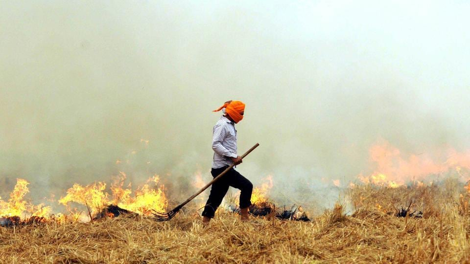 Patiala, India-20 October 2016:::Despite ban, a farmer burns paddy stubble in a field in Patiala, Punjab.