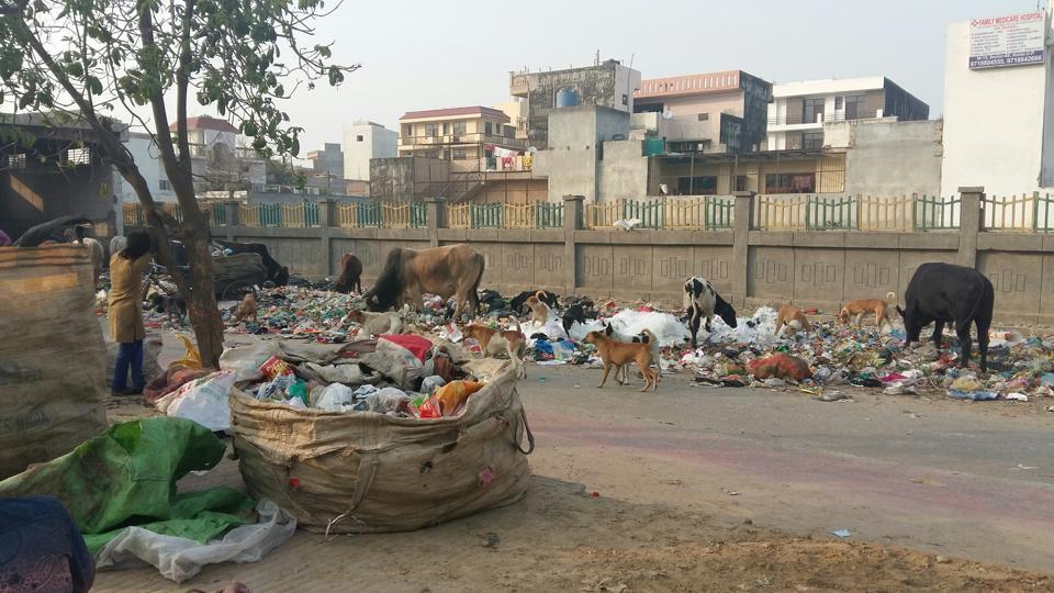 noida,waste,astoli