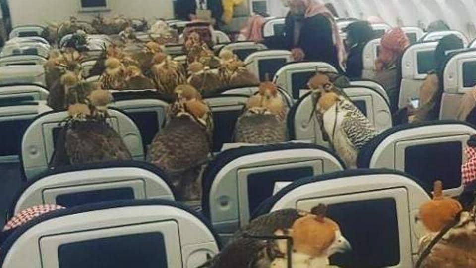 Saudi prince,Falcon,UAE
