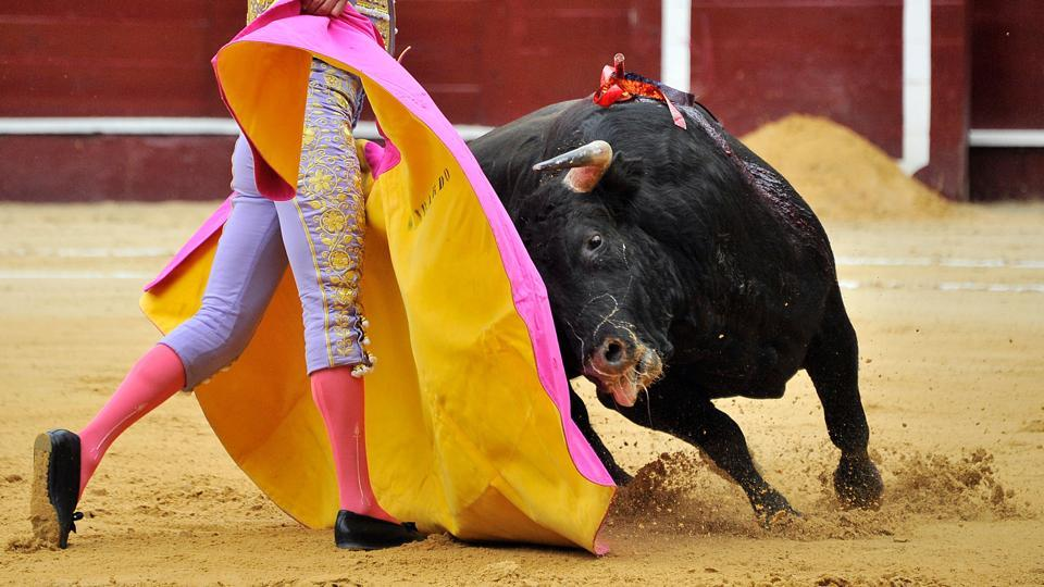 The injured bull during a bullfight at the Santamaria bullring in downtown Bogota.  (GUILLERMO LEGARIA / AFP Photo)