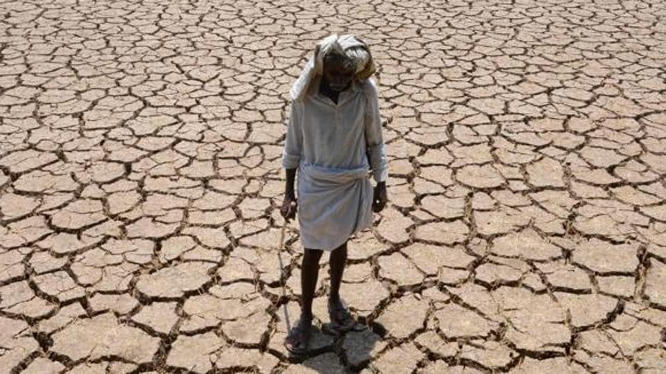 A dried up cotton field in Hyderabad.
