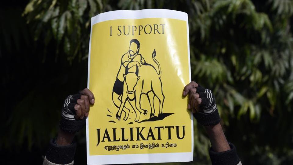 Jallikattu supporters during a protest march against Jallikattu ban at Jantar Mantar in New Delhi.