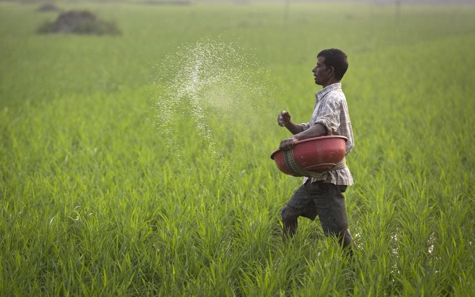 An Indian farmer sprays fertilizer in his paddy field in Roja Mayong village, east of Gauhati, India.