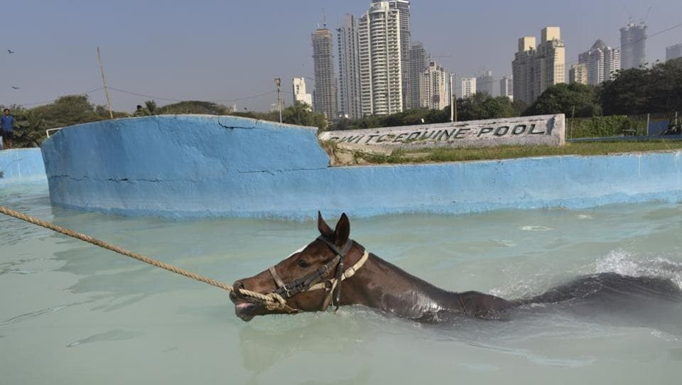 You can take this horse to the water. (Anshuman Poyrekar/HT PHOTO)