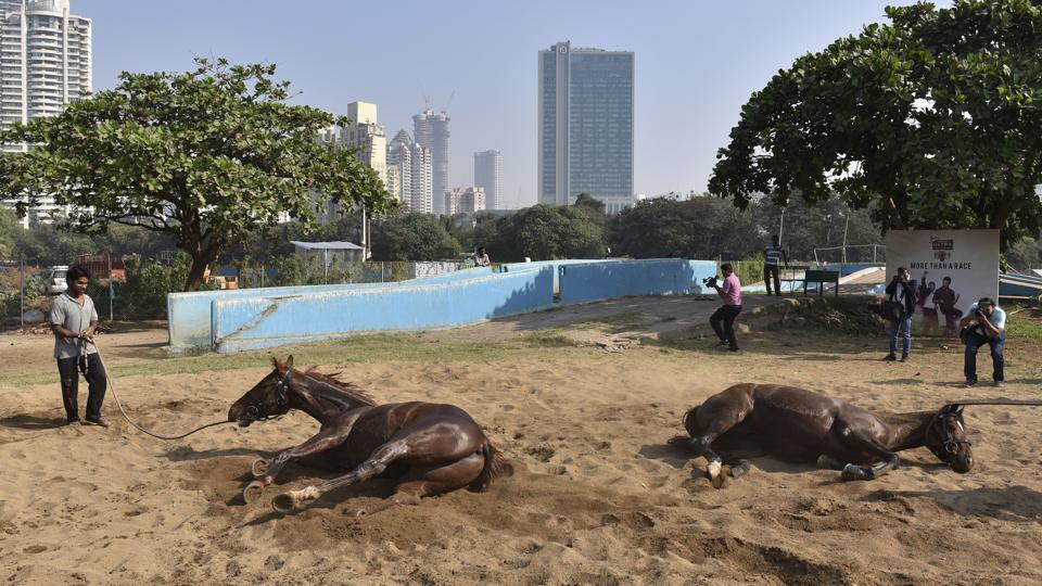 Derby horses have a mud bath  as part of their exercise regimen. (Anshuman Poyrekar/HT PHOTO)