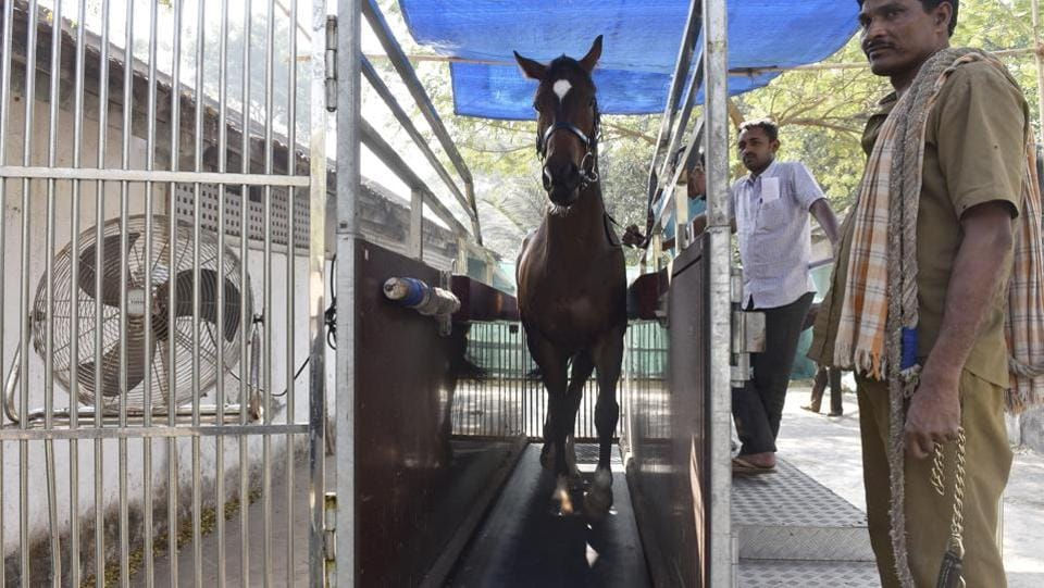 This racehorse is ready for the course. (Anshuman Poyrekar/HT PHOTO)