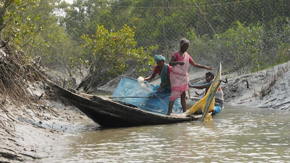 Villagers catch baby tiger shrimps in the Sunderbans.These villagers often get killed by tigers and crocodiles, but the deaths go unreported since they do not have forest permits to enter this area.