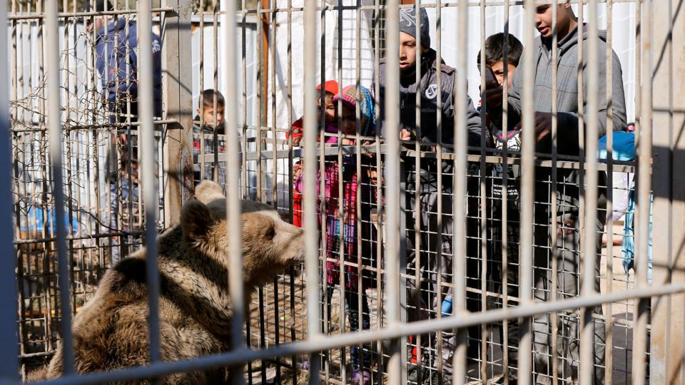 Children look at a bear at Nour Park in Mosul's zoo. (REUTERS photo)