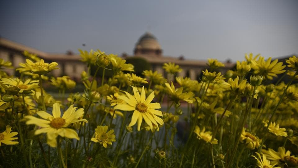 Helianthus commonly known as Sunflower at display in Mughal gardens. The Mughal Gardens of Rashtrapati Bhavan is one of the most beautiful gardens of the world. (Sonu Mehta/HT PHOTO)