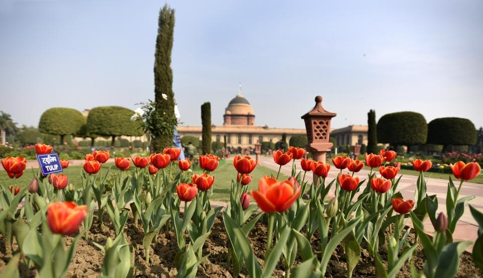 Red Tulips. The Mughal Gardens combines many elements of British garden art. Mughal canals and terraces at different levels and flowering shrubs fuse with European flower beds, lawns and privet hedges. (Sonu Mehta/HT PHOTO)