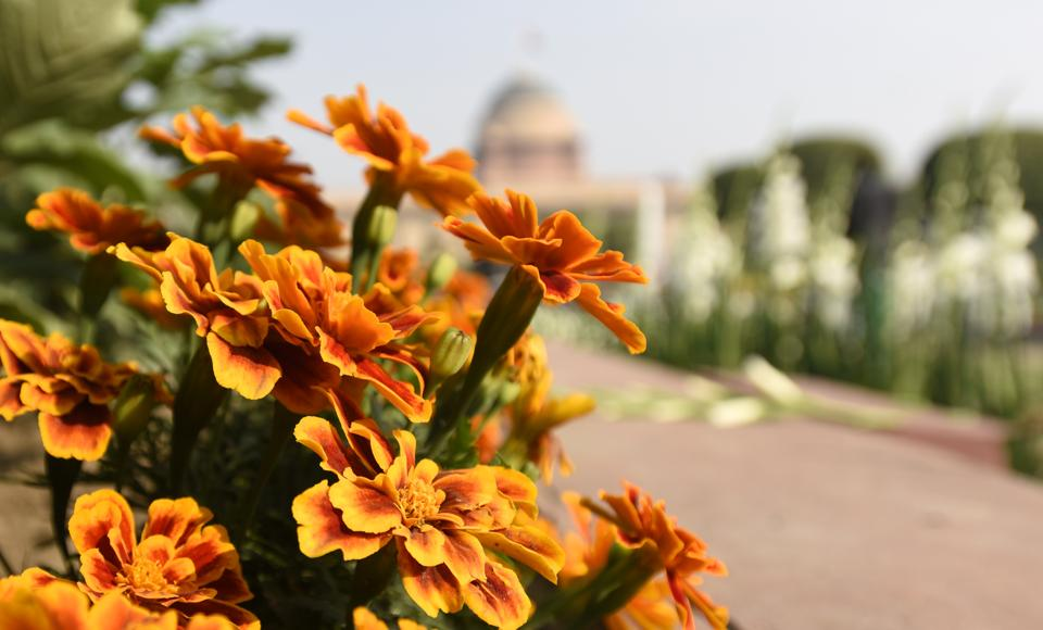 The geometrical decorum and the play with water which are the essence of Mughal Gardens have been combined with the organized caprice of a British garden. (Sonu Mehta/HT PHOTO)