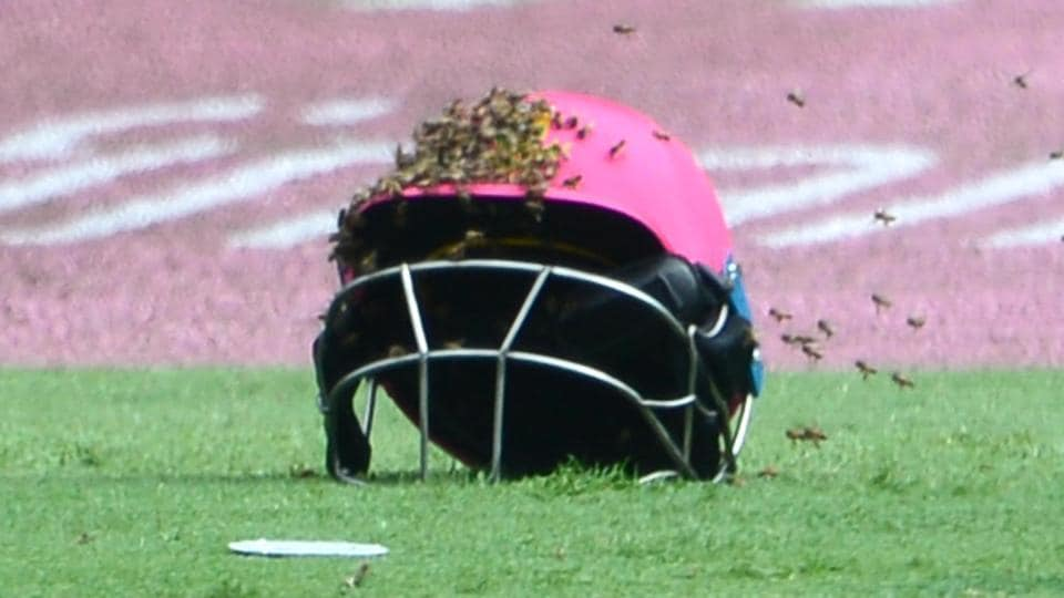 The third ODI between South Africa vs Sri Lanka was held up for close to one hour by a swarm of bees that had invaded the Wanderers stadium.