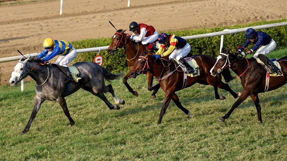 Hall Of Famer, ridden by David Allen, crosses the finish line, ahead of second-placed Serjeant At Arms and third-placed Temerity at the Mahalaxmi Racecourse in Mumbai. (Kunal Patil/Hindustan Times)