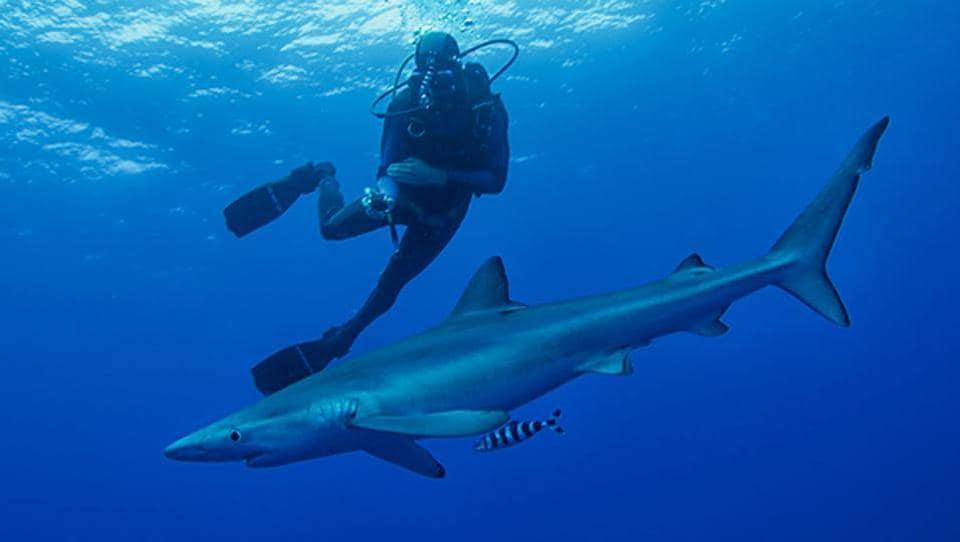 Diving Destinations,Underwater,Aqua Life