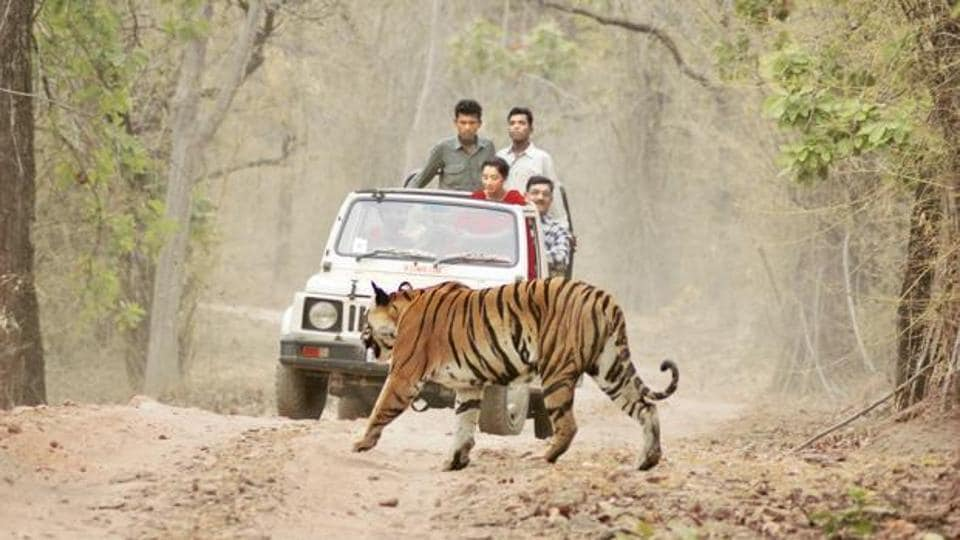 As many as 419 people have been killed by elephants and 11 by tigers this year