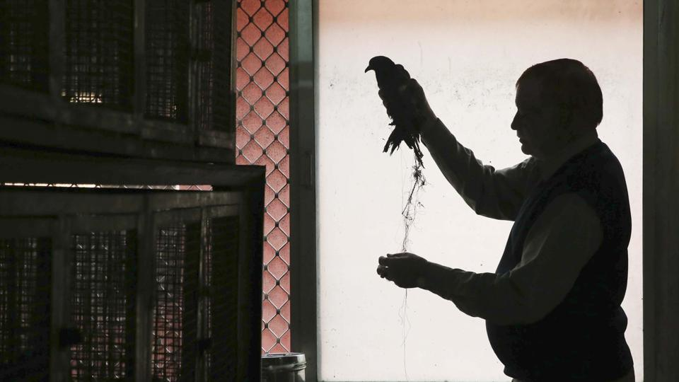 A compounder treats a bird entangled in a glass coated thread used to fly kites at the Bird Hospital in Jaipur, Rajasthan.
