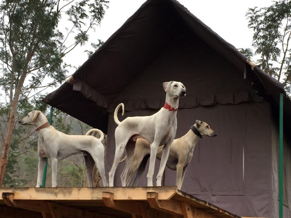 Indian dogs,S Theodore Baskaran,Chippiparais
